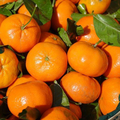Mandarina Ecológica Nadorcott