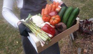 Fruta y Verdura Ecológica y de Temporada