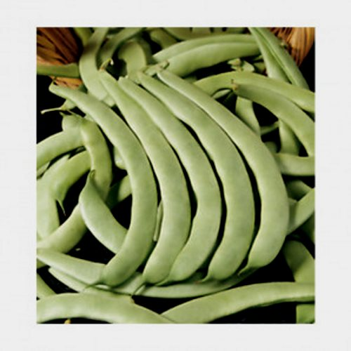 Judia Verde Plana Agroecológica